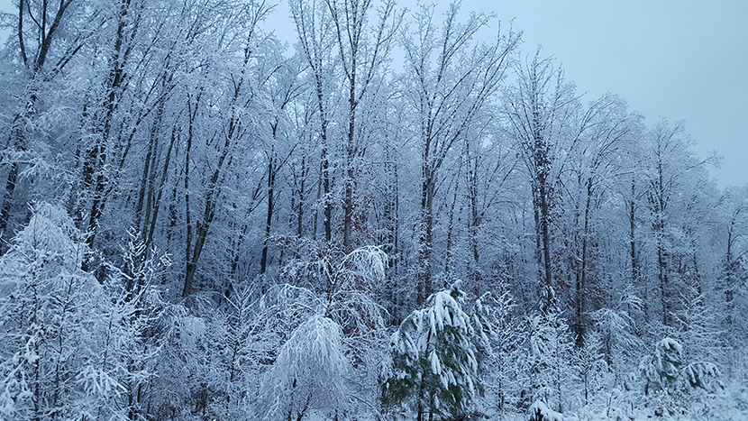Snow on Trees.png